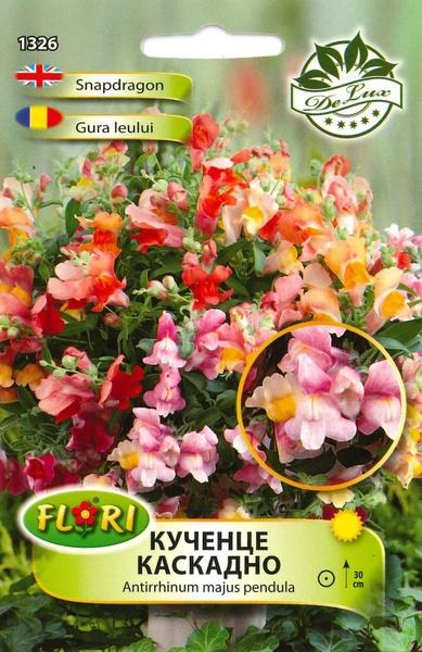 Gura leului curgatoare PENDULA - Seminte Flori Curgatoare Gura Leului Pendula de la Florian