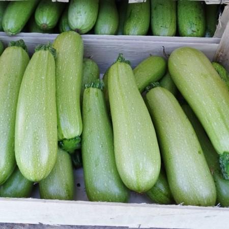 Milet F1 - 50 grame - Seminte de dovlecei cu fructe uniforme de culoare alb-verzuie ce ofera productii ridicate si constante pe parcursul intregii perioade de vegetatie de la Enza Zaden