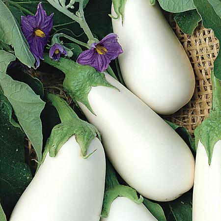Romanita vinete albe (400 seminte) vinete albe cu sepale verzi, fructe mari, soi romanesc, SCDL Buzau