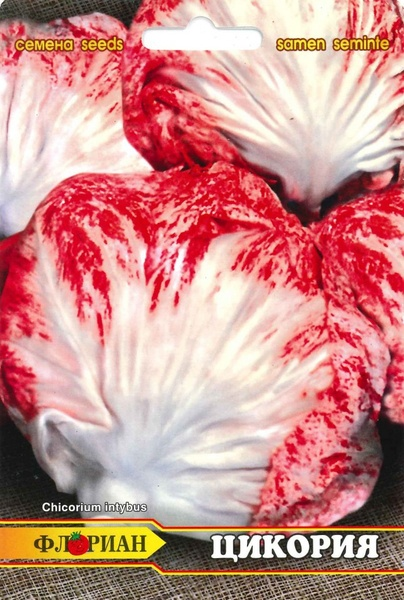 Salata Chioggia  - 3 gr - Seminte de Salata Soi Cicoare Florian Bulgaria