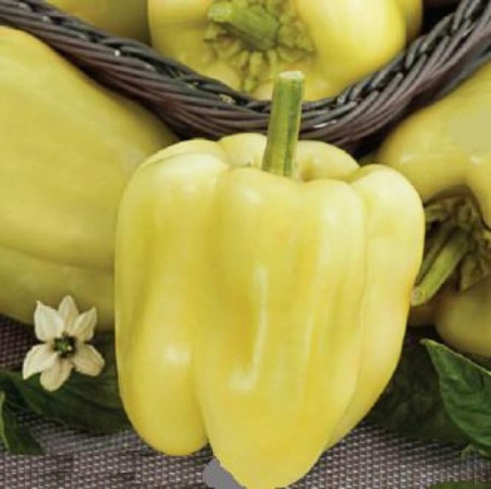 Seminte ardei gras Andreika (1 g), tip blocky, Agrosel