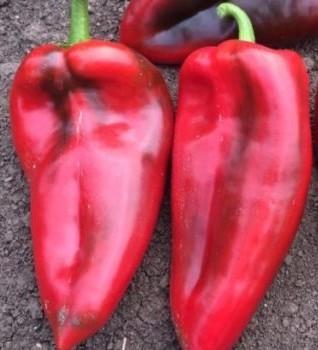 Seminte ardei kapia MAX (10 gr), soi semitimpuriu olandez fructe mari, Pop Vriend