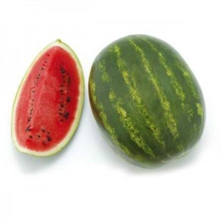 Seminte pepene verde Stabilo F1/ ZKI 10142 F1 ( 1000 seminte), tip crimson, ZKI