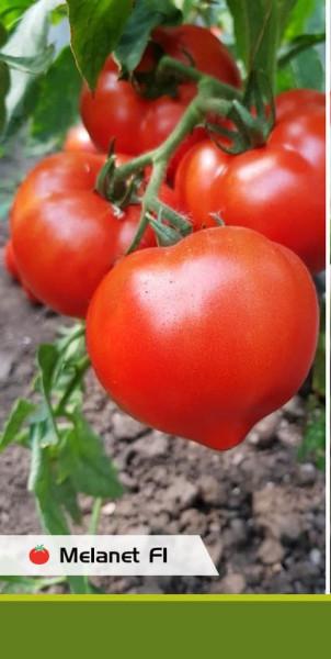 Seminte rosii Melanet F1 (500 seminte), extratimpurii semideterminate, Syngenta
