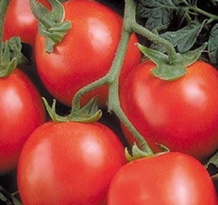 Seminte rosii Perfectpeel F1 (1000 seminte), determinate, Seminis