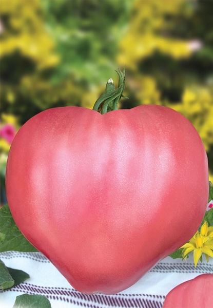 Seminte rosii Rozov Dar (0.2 gr), tip Gigant Dar Roz Inima de Bivol, Florian