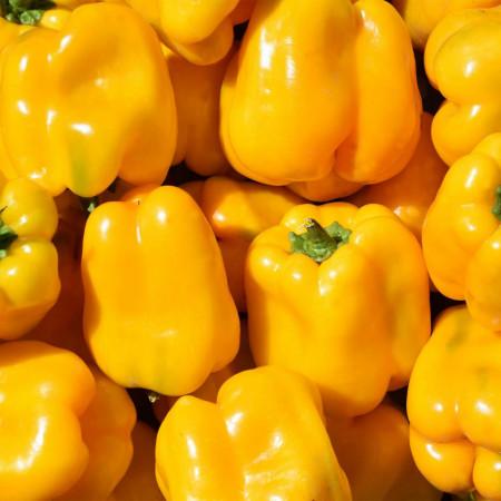Ardei gras Asti Yellow (1 kg), seminte de ardei gras Asti Galben, pulpa groasa, gustoasa, galben intens, Agrosem