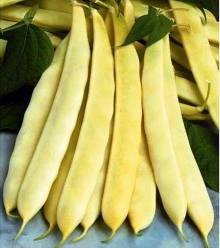 Auria Bacaului (15 gr) seminte de fasole urcatoare galbena cu pastaie lata, Agrosem