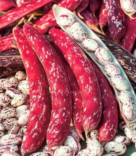 Borlotto Lingua di Fuoco (50 gr) seminte fasole pitica tarcata, Agrosem