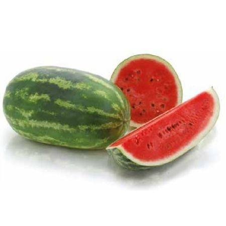 Daytona F1 - 1000 sem - Seminte de pepene verde cu fructe ce ating 12-14 kg avand uniformitate ridicata rezistenta la transport manevrare si depozitare plasand intreaga recolta in prima categorie de fructe  de la Sakata
