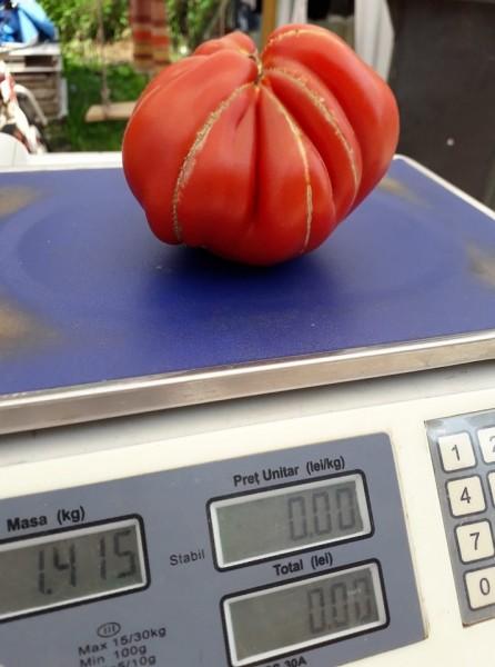 Deko F1 - 100 sem - Seminte de rosii tip Inima de Albenga ce se remarca printr-o crestere nedeterminata cu o legare si o uniformitate a fructelor la etajele superioare excelenta iar maturitatea este semitimpurie de la ISI Sementi
