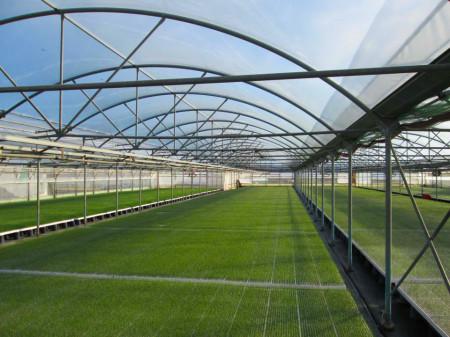 Folie solar UV 5 ANI E/AG, EVA, IR 200 mic 9.5m, (pret pe ml), folie polietilena sera de calitate superioara, Patilux