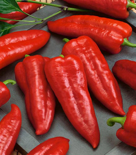 Marconi Red (75 seminte), ardei lung capia rosu, Agrosem