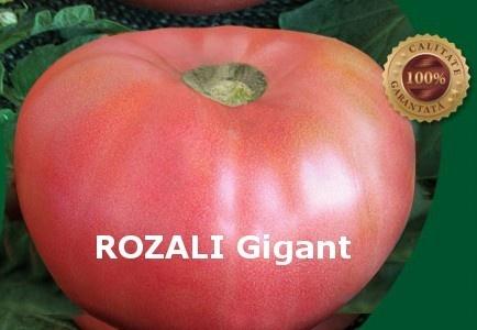 Rozali - 10 gr - Seminte de Tomate Roze Mari Nedeterminat Semitimpuriu tip Gigant cu tulpina inalta de la Florian Bulgaria