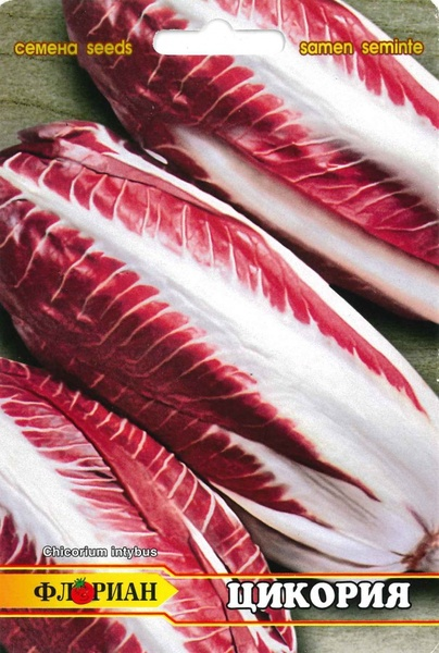 Salata Red Treviso  - 3 gr - Seminte de Salata Soi Cicoare Florian Bulgaria