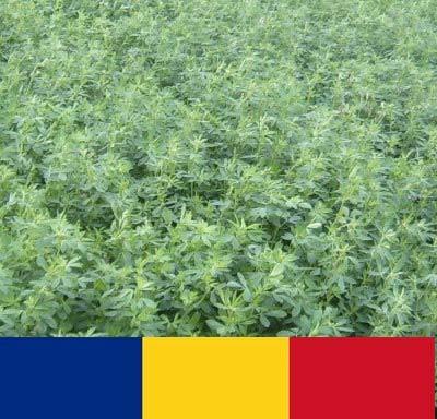 Samanta lucerna romaneasca Roxana (10 kg), rezistenta la inghet soi autohton, 4 Agro