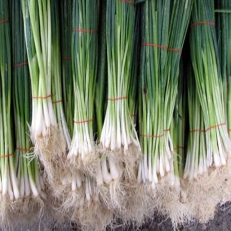 Seminte ceapa AX 90-195 F1 (10.000 seminte), ceapa de legatura, agroTIP