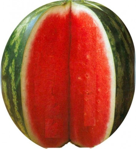 Seminte pepene verde Royal Fantasy F1 (100 seminte), tip Crimson Sweet, Hektar Agrosel