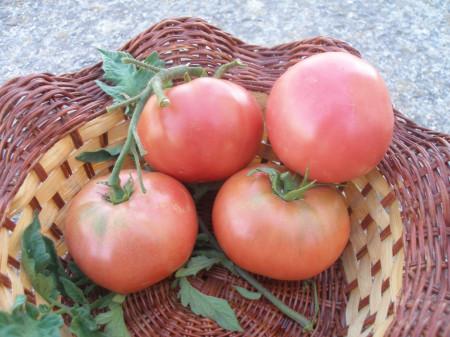 Seminte tomate Ideal Roz (0.2 gr), Rozov Ideal, soi nedeterminate semitimpurii, Opal