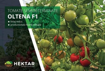 Seminte tomate Oltena F1 AS5 311 F1 (500 seminte), timpurii, Hektar