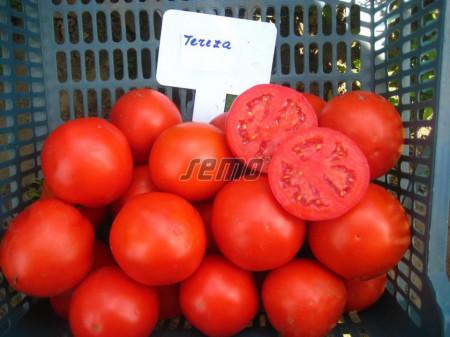 TEREZA F1 seminte tomate (1000 sem) hibrid tomate de camp timpurii, planta viguroasa si productiva, Semo Cehia