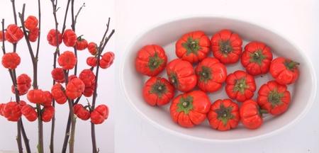 Vinete Decorative - 15 sem -  Seminte de Vinete Decorative Planta Anuala