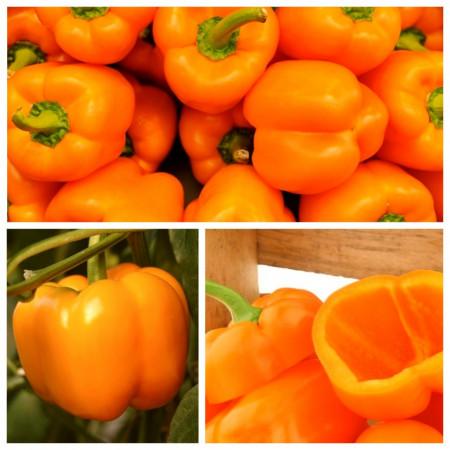 Ardei gras portocaliu Rewia (70 seminte) ardei portocaliu, gust si culoare deosebite, Florian