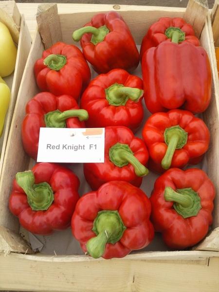 Ardei gras Red Knight F1 (500 seminte), timpuriu, Seminis