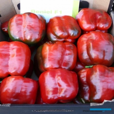 Beniel F1 (500 seminte) ardei gras timpuriu fructe uniforme, Syngenta