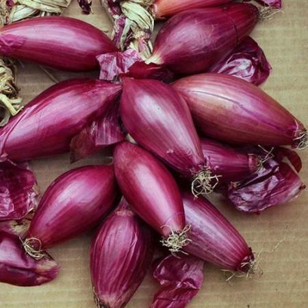Ceapa Rossa Lunga di Firenze (20 gr) seminte de ceapa lunga rosie de capatana alungita mare, Agrosem