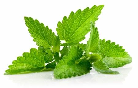 Menta - 0.1 gr - Seminte de Menta Plante Aromatice si Medicinale de la Florian Bulgaria
