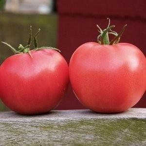 Rosii Aphen F1 - 10 seminte de tomate roz Hibrid nedeterminat extratimpuriu