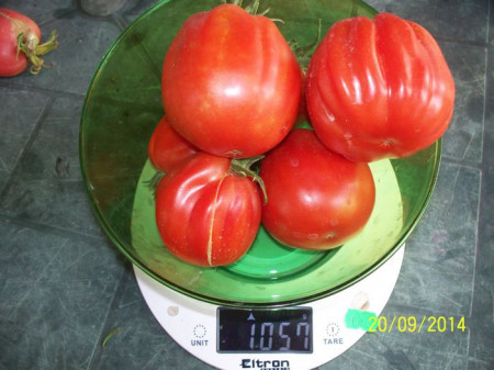 Rosii Pearson sel d'Albenga(250 seminte), tomate cu fructe mari in forma de para tip Albenga, Prima Sementi