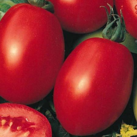 Rosii Roma VF (1 kg), seminte de tomate soi semitardiv fructe ovale, gust placut, Agrosem