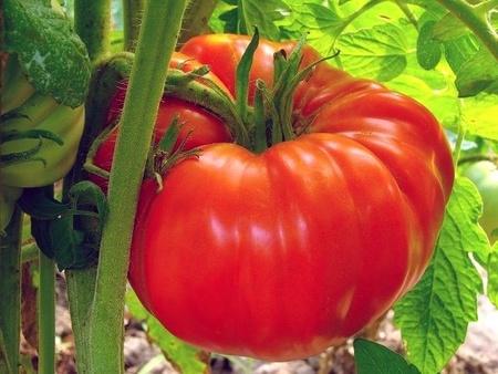 Rosii Zmeura Gigant (Malinowy Olbrzym) 150 de seminte Tomate tip Gigant Roz Soi cu Crestere Nedeterminata origine Polonia