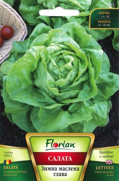 Salata de Iarna Capatana Maslinie - 3 gr - Seminte de Salata Soi timpuriu de iarna Florian Bulgaria