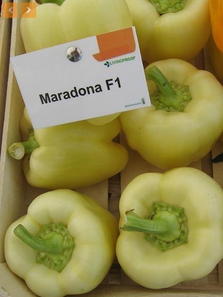 Seminte ardei gras Maradonna F1 (500 seminte), nedeterminat, Seminis