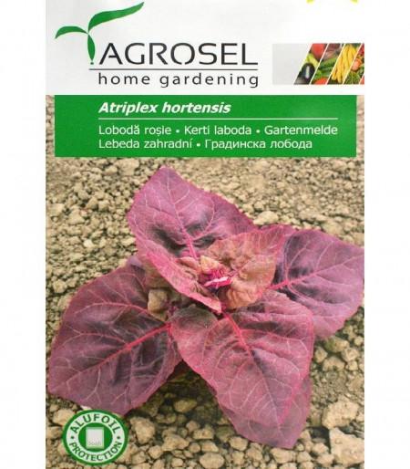 Seminte loboda rosie (2 gr), planta anuala, Agrosel