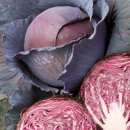 Seminte varza Red Wizard (1000 seminte), varza rosie, Hektar