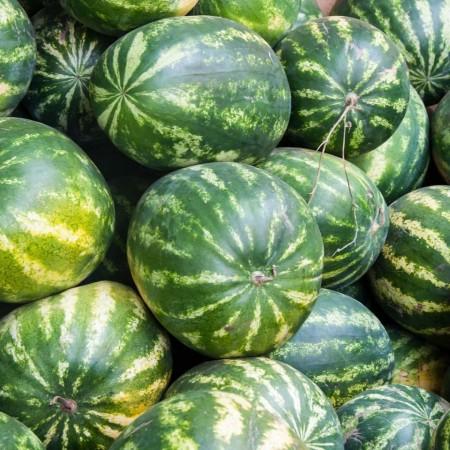 Sorento F1 (1000 seminte) pepene verde hibrid timpuriu de la Syngenta