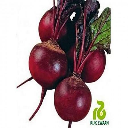 Akella - 25000 sem - Seminte de sfecla rosie cu o perioada de vegetatie de 55-60 de zile ce se preteaza semanarii in intervalul sfarsit de martie si sfarsit de iunie de la Rijk Zwaan