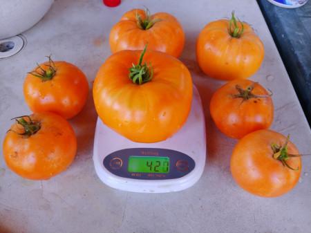 Amana Orange (40 seminte) rosii portocalii soi heirloomtip beefsteak, Burpee SUA