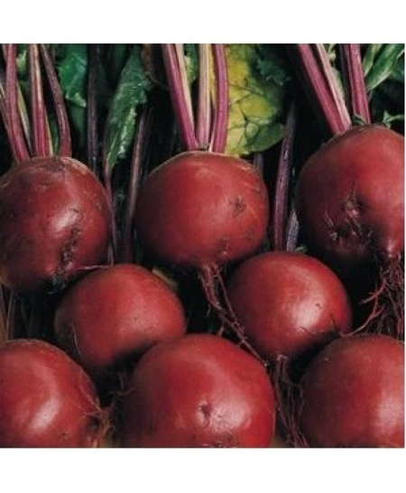 Bonel-250 gr.-seminte de sfecla rosie semitimpurie cu radacina rotunda si marime medie de la Hazera