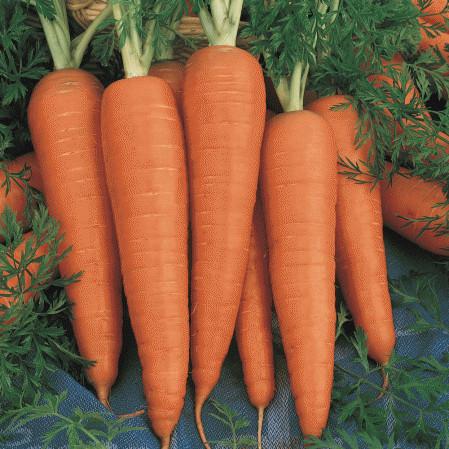 Danvers (5 gr) seminte de morcovi conic-cilindrice, Agrosem