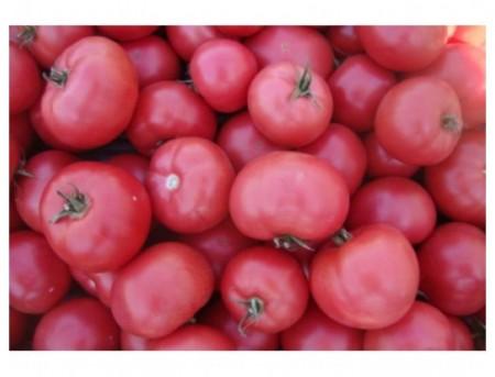 Esmira F1 - 100 sem - Seminte de rosii cu fructe uniforme mari de culoare roz avand o greutate cuprinsa intre 200-250 grame cu un gust excelent la fel ca cel din gradina bunicii de la Rijk Zwaan