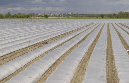 Folie mulch transp. 100cm/15mic/3000m , folie mulcire polipropilena de calitate superioara, Achaika Plastics