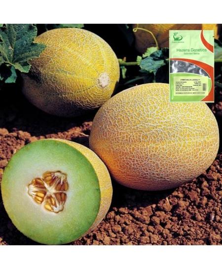 Lavigal F1 (500 seminte) seminte pepene galben tip Galia, Hazera