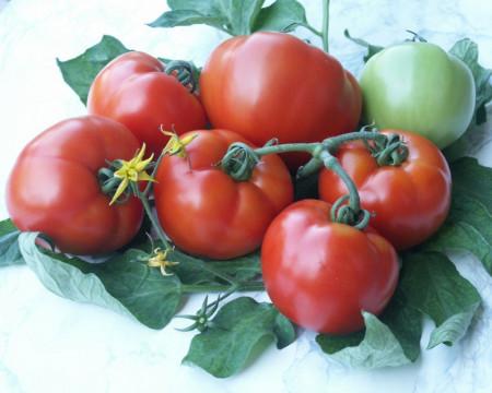Parris F1 (50 seminte) tomate extratimpurii Parris F1, Geosemslect Bulgaria