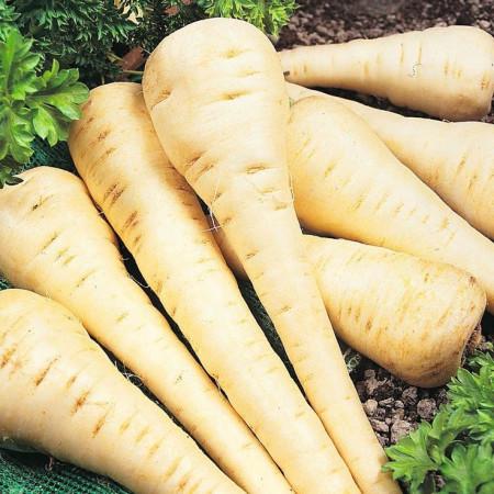Patrunjel radacina (30 grame), seminte de patrunjel radacina, semilungi, pulpa dulce, Agrosem