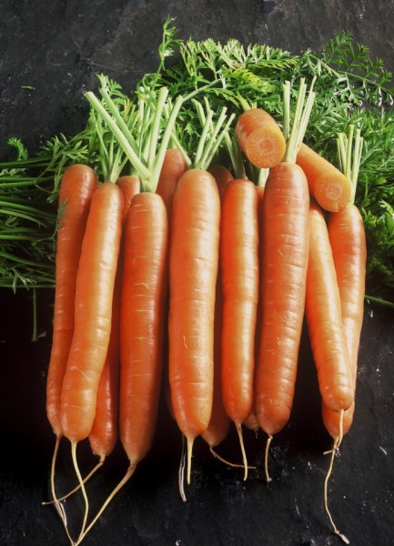 Seminte morcovi Cosianna F1 (25.000 sem), cal.1,2-1,4mm, agroTIP